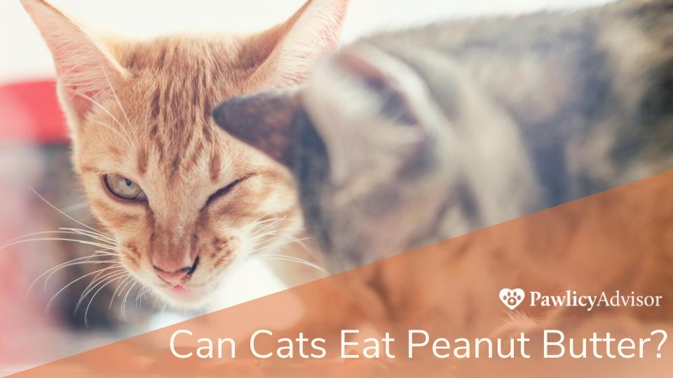 Cat dislikes taste of food in mouth