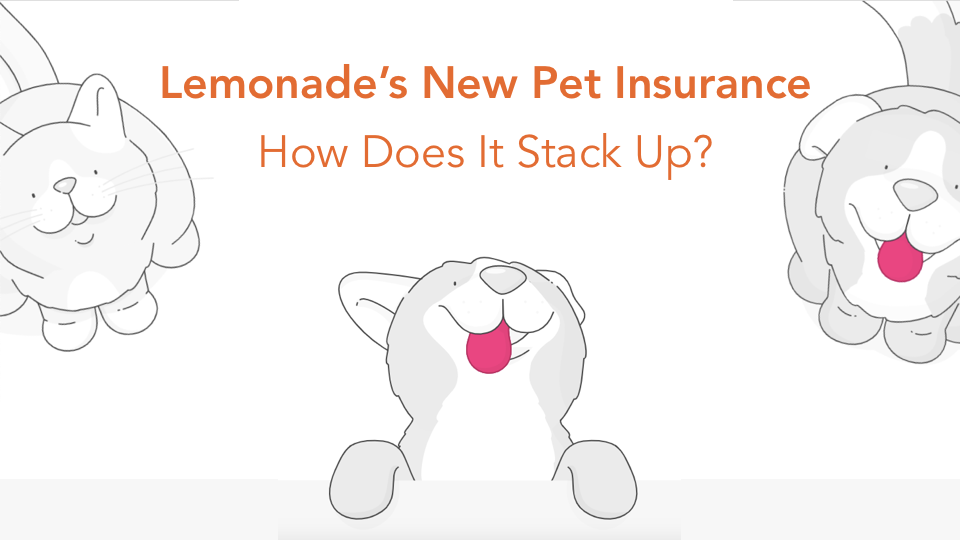 lemonade's pet insurance cats and dogs