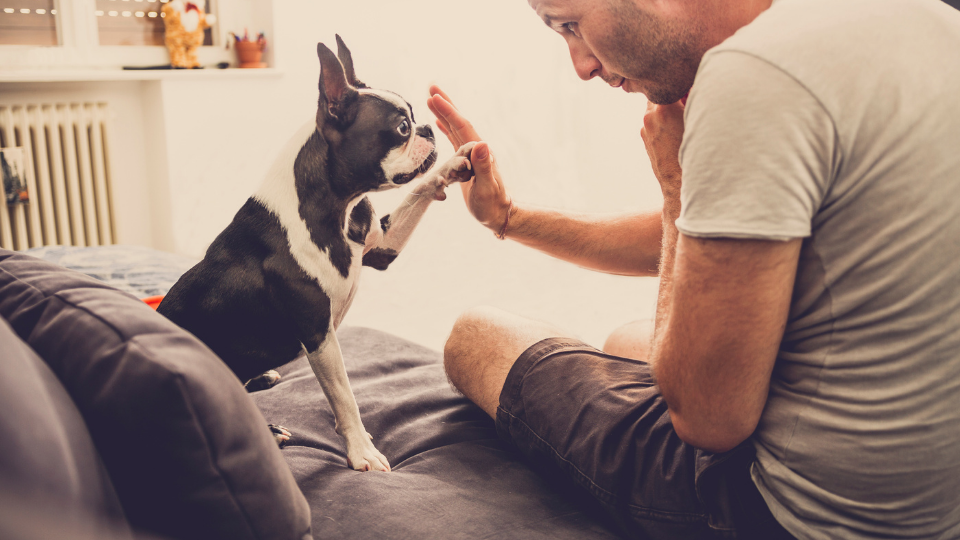 Trupanion pet insurance can pay your veterinarian directly. But is it good pet insurance? Here's what you need to know.