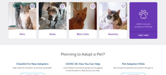 petfinder pets near you