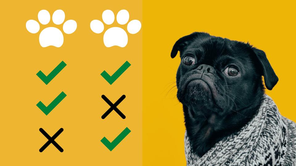 pet insurance comparison showcase