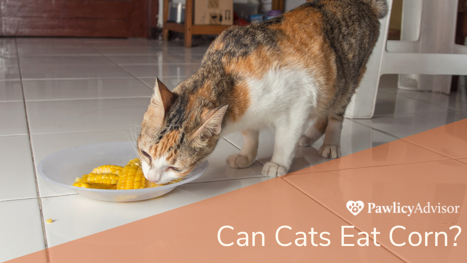 Cat eating corn from a bowl on the floor