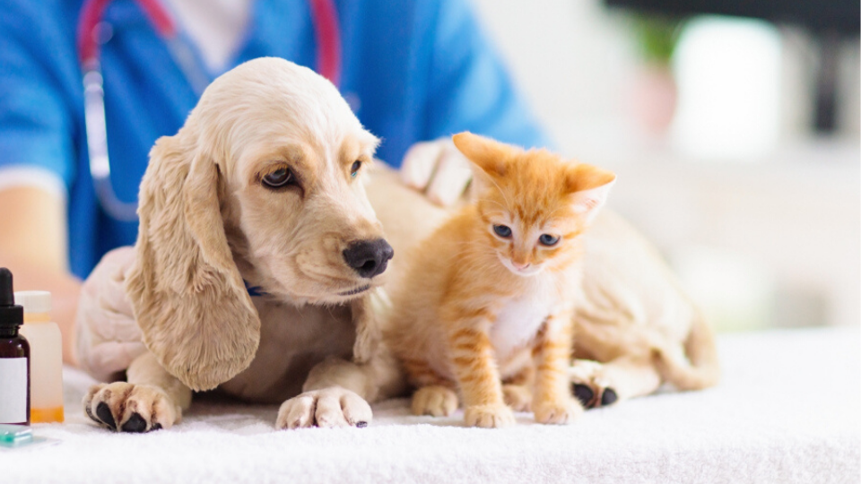 young pets at a routine veterinary checkup
