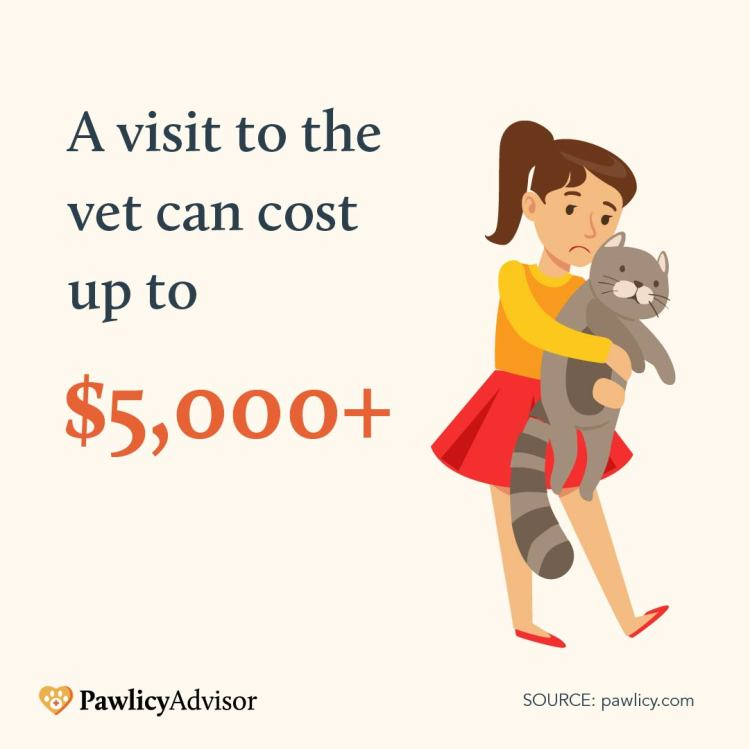 A visit to the vet can cost up to $5000