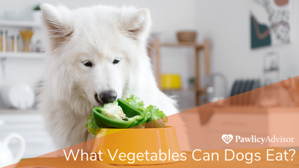 White dog looking at bowl of vegetables