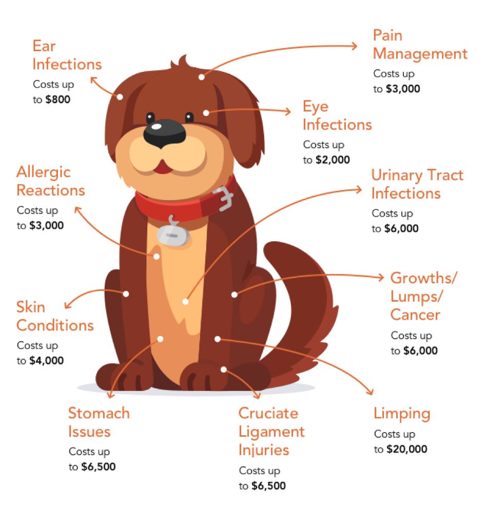 dog-costs-of-treatment