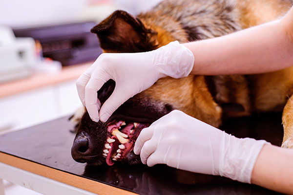 dog-teeth-cleaning-exam