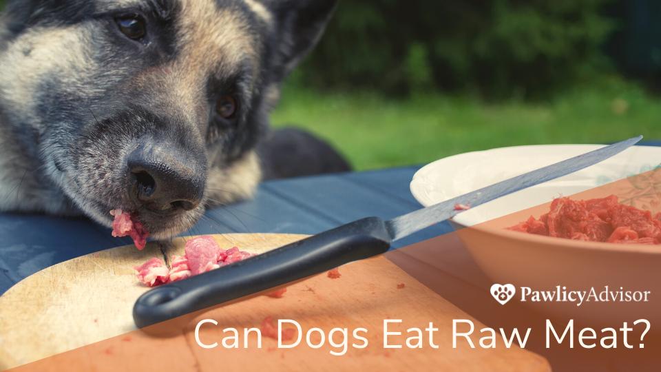 Dog eating raw meat off cutting board
