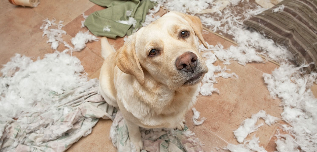 dog with ripped up mess at home