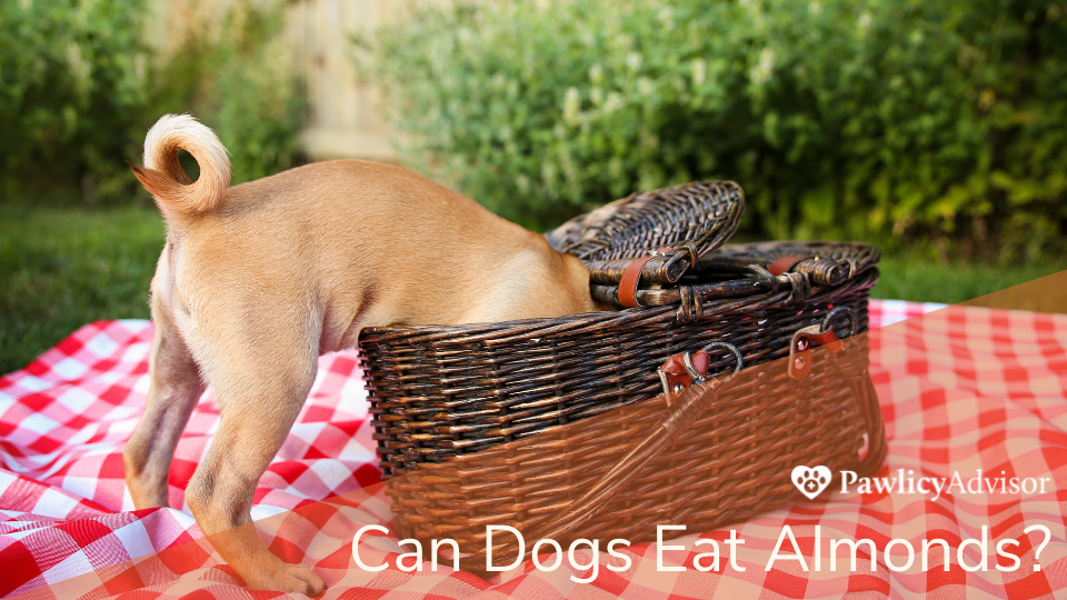 Dog reaching into picnic basket for food