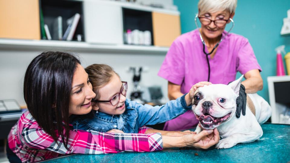 conversation between veterinarian and pet owner
