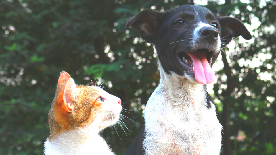cat and dog together outside