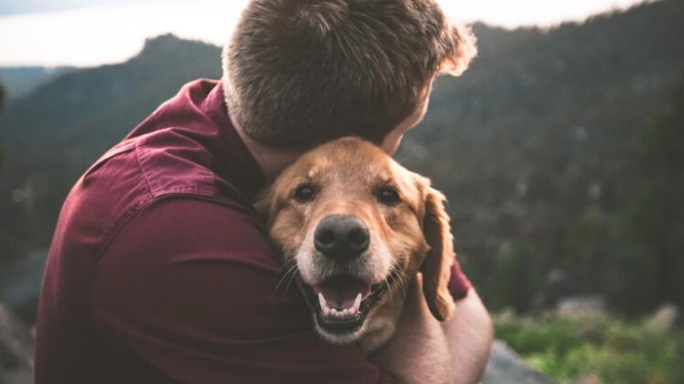 Pet Parent and Happy Dog