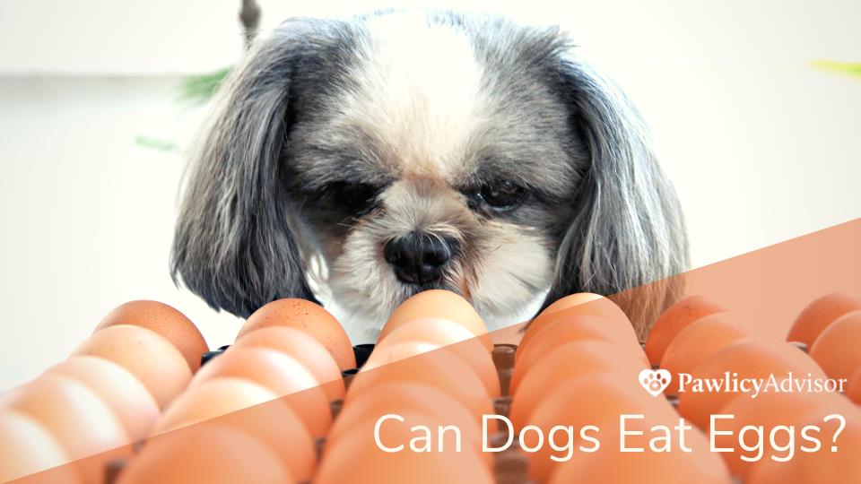 Dog looking at a carton of eggs