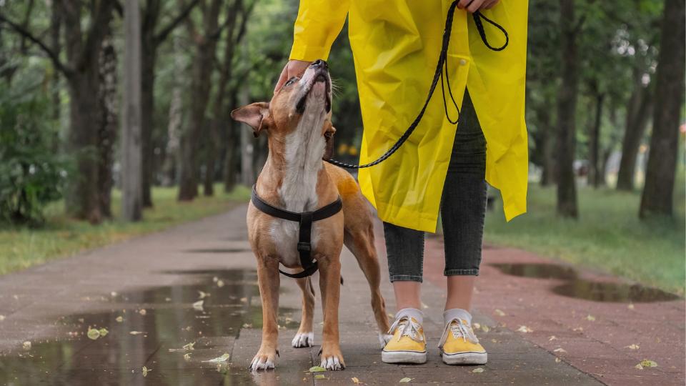 woman in rain coat petting dog
