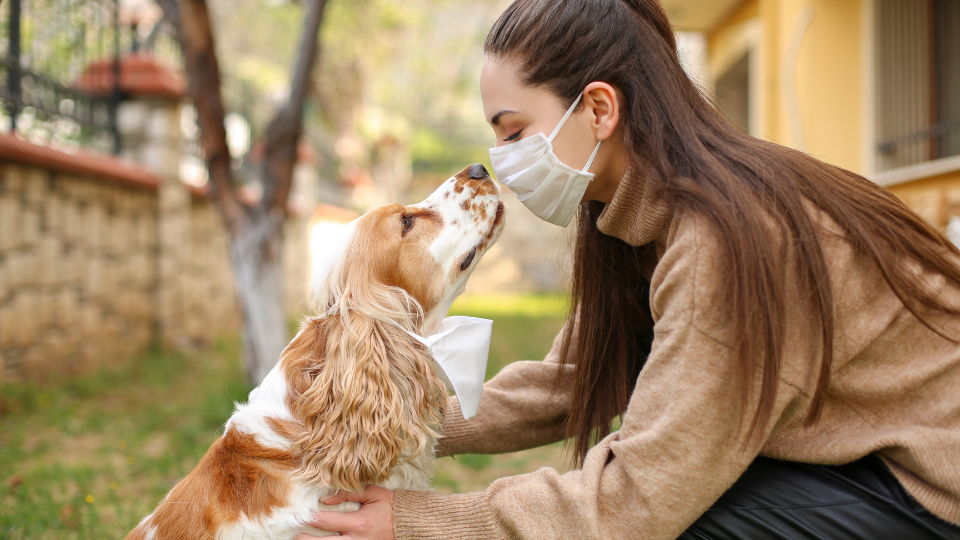 A woman wearing face mask gets kiss from Spaniel dog