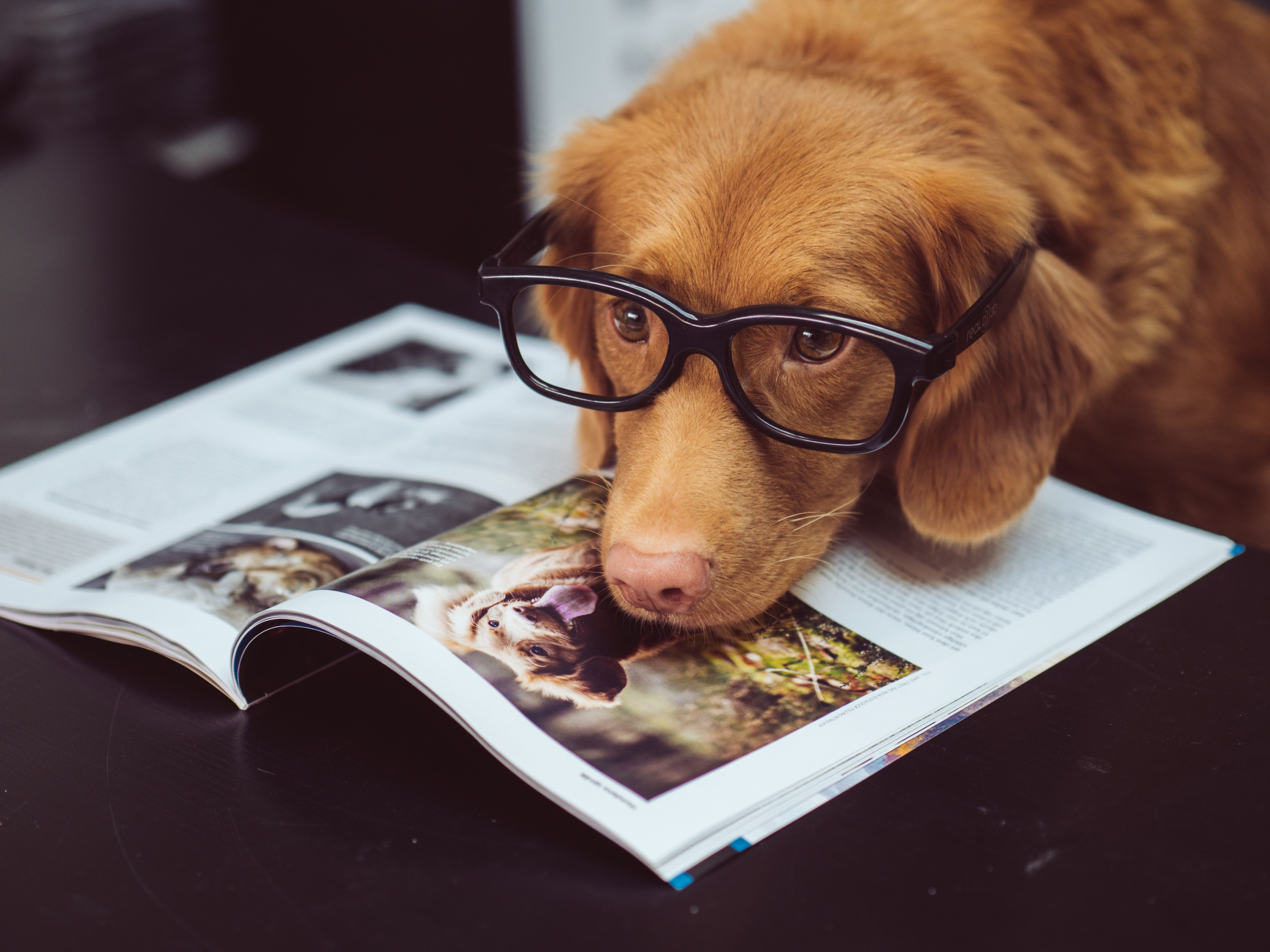 A well-informed dog reads a magazine.