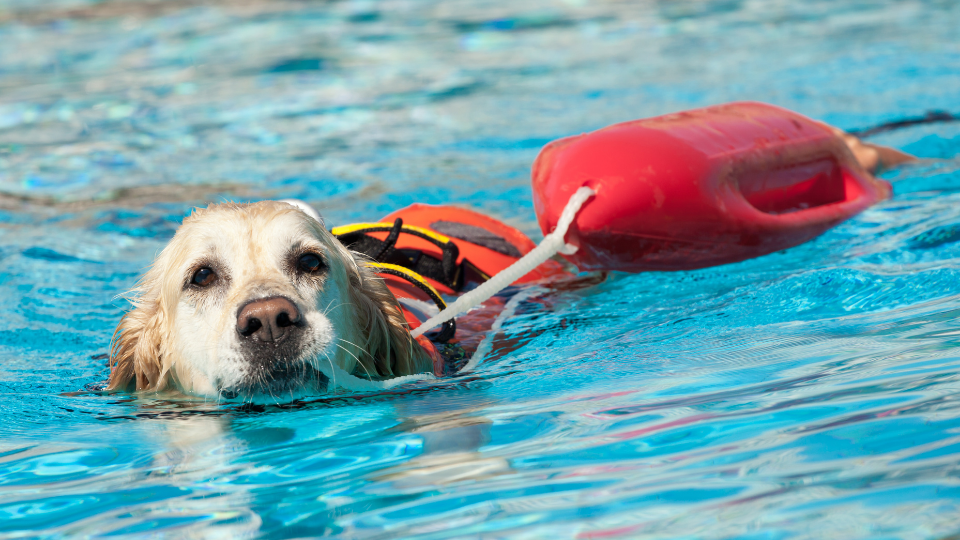 Rescue dog swimming in water