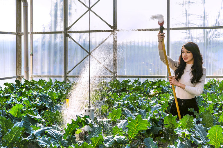 Student sprays water on plants in greenhouse