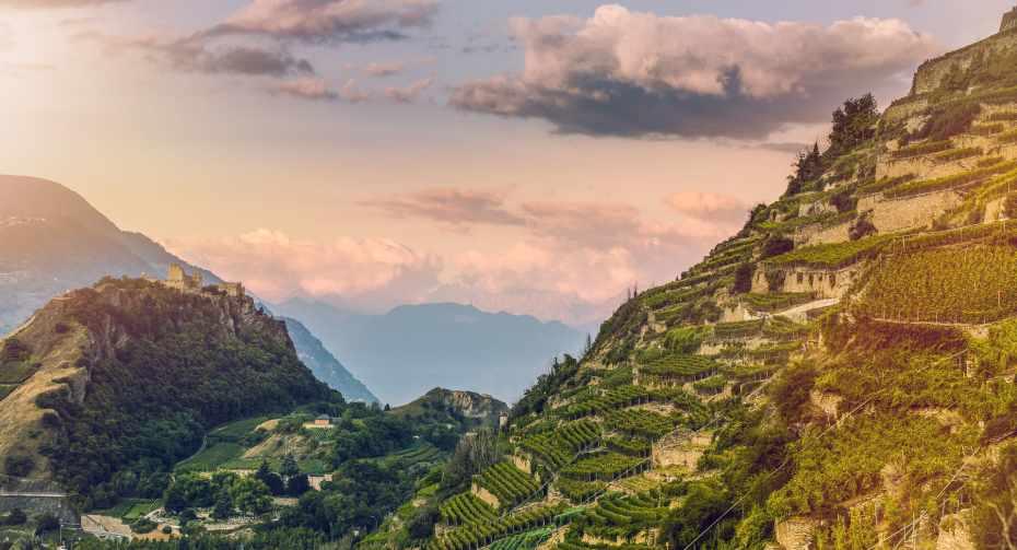 mys-Sion - Wine & Dine Tour-Matterhorn Region AG - 2015_Œnotourisme_Vignoble_(c)Valais Wallis Promotion - Christian Pfammatter (30)-1.jpg
