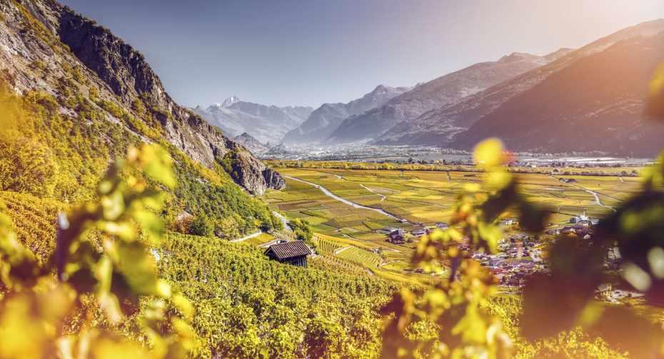 mys-Chamoson – patrie du Johannisberg-Matterhorn Region AG - 2017_Automne_Oenotourisme_Vignoble_18_©Valais Wallis Promotion - Frederic Huber.jpg