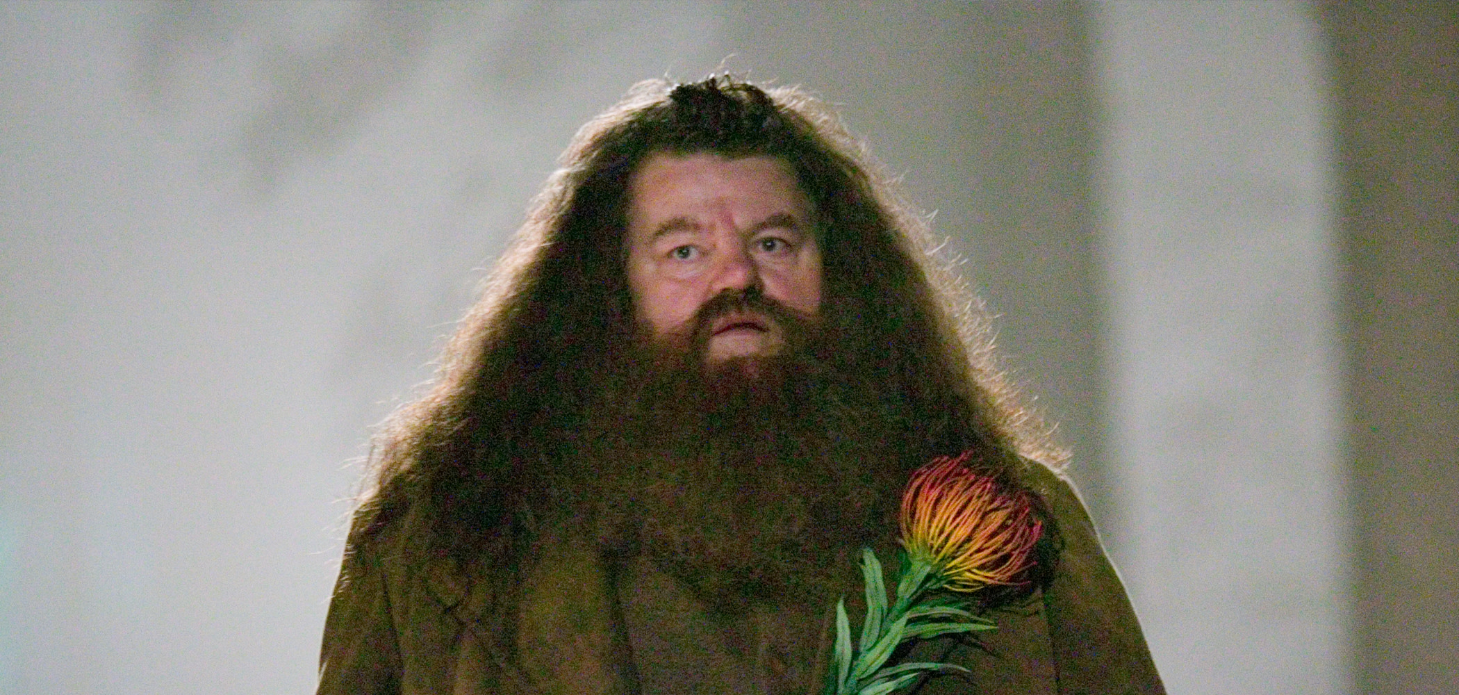 HP-F4-hagrid-web-header