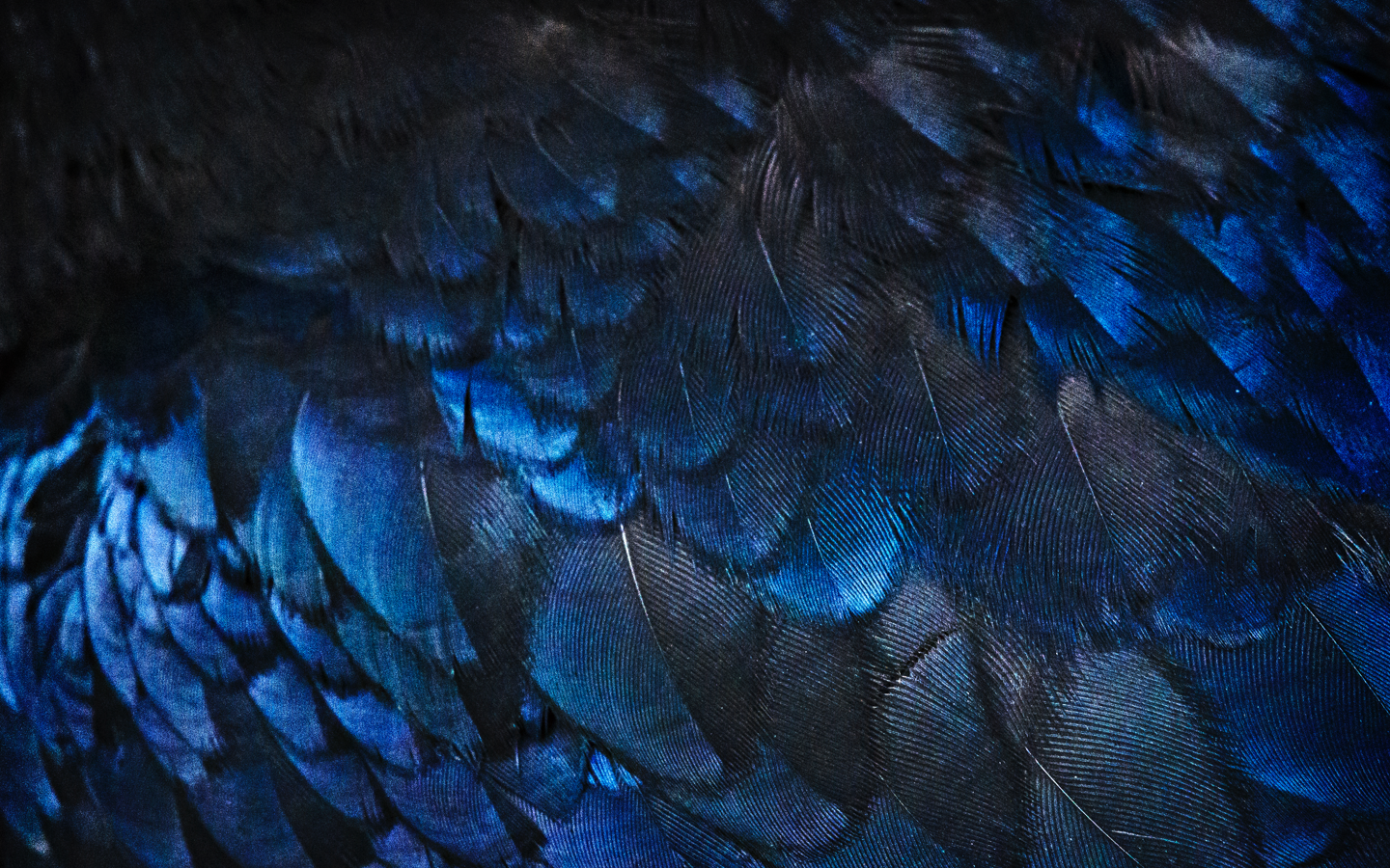 all about ravenclaw