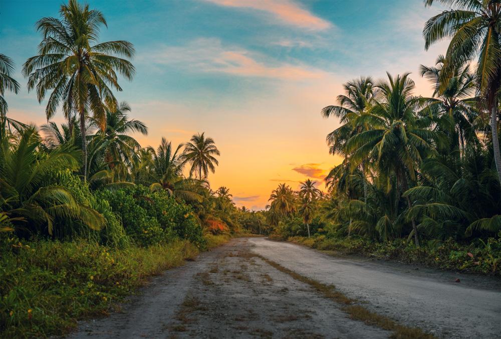 Palms in Kerala, India