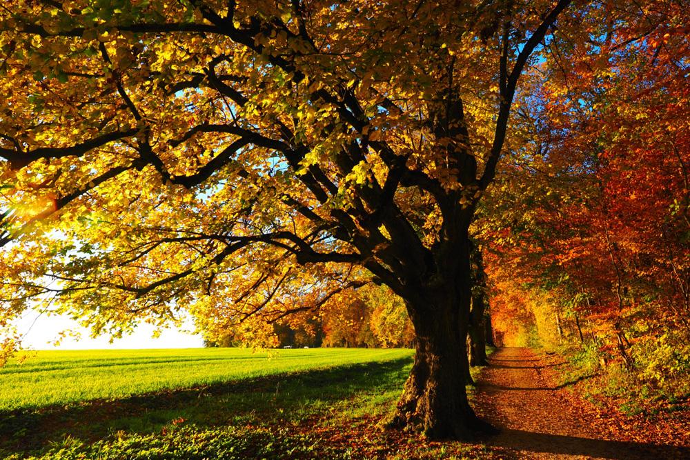 Autumn colors in Latvia