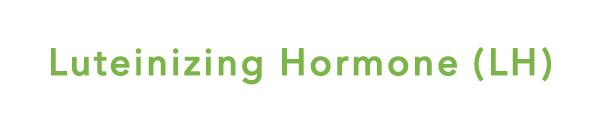 womenshormones LH
