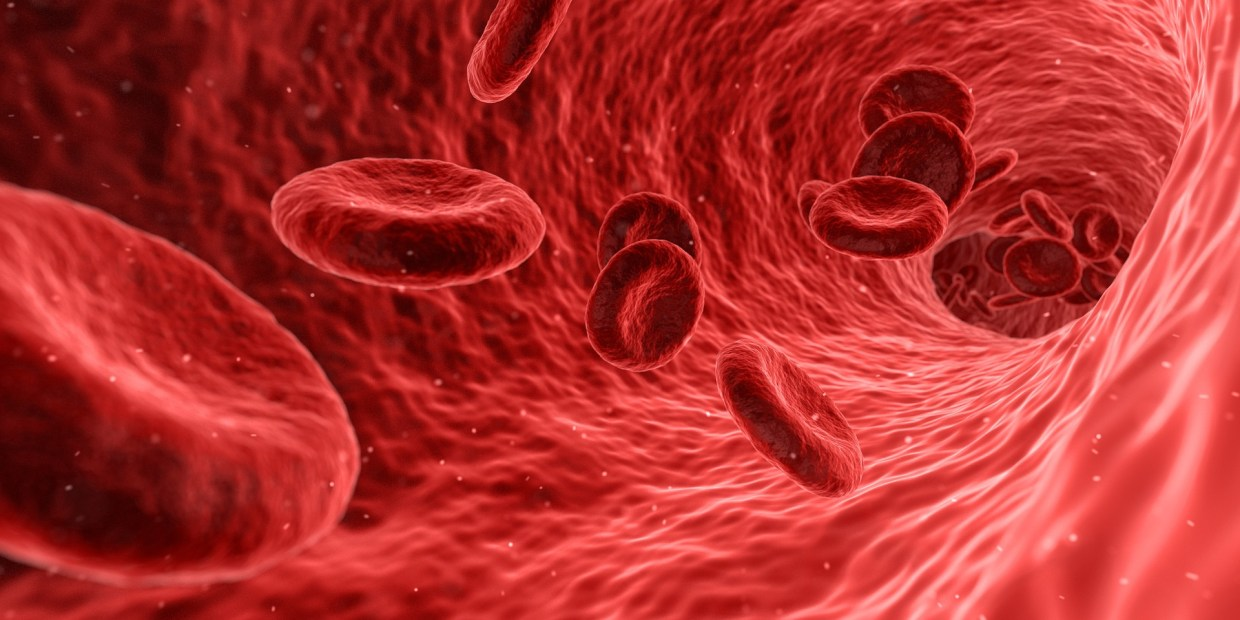 Red Blood Cell