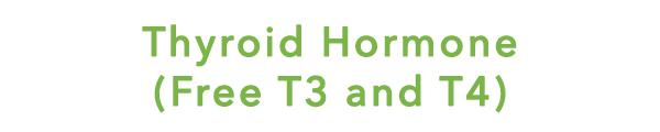 womenshormones T3t4