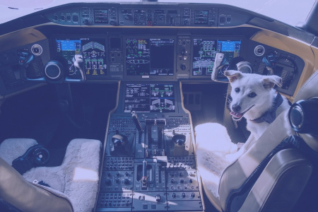 Dog in the cockpit of a plane
