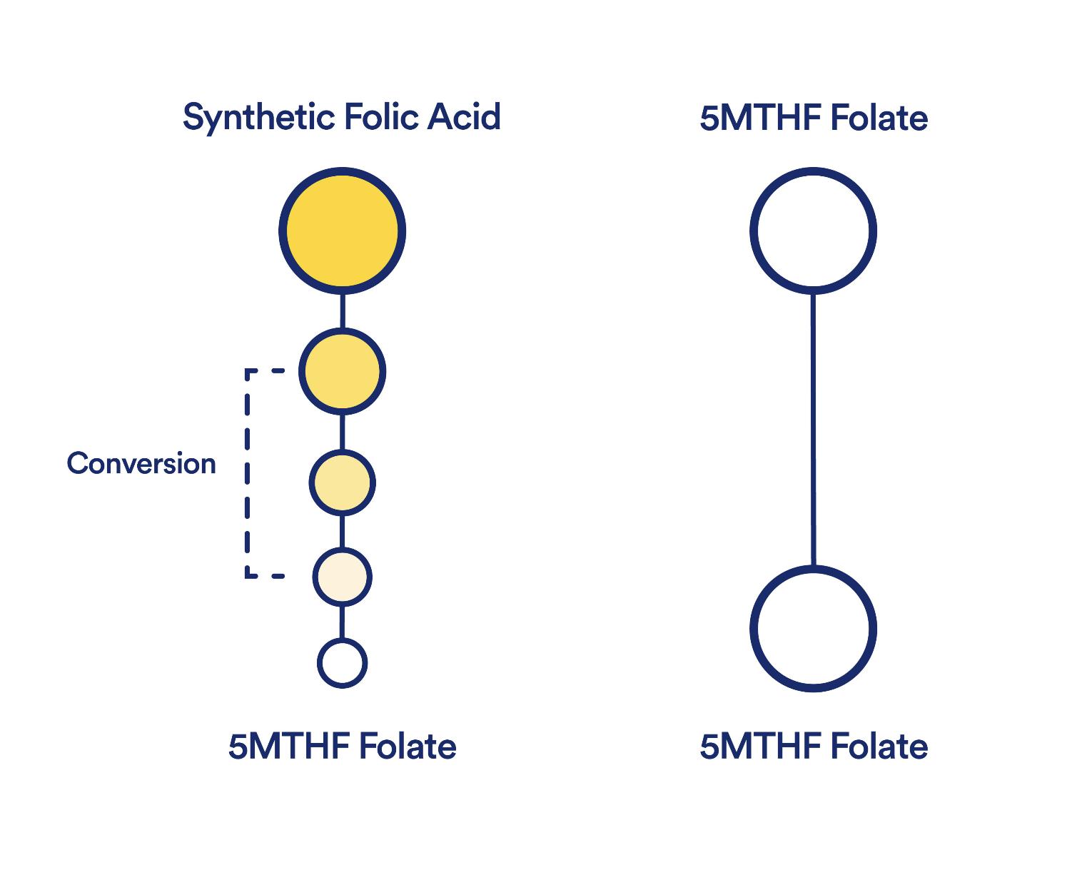 MTHF vs Folic Acid - Methylated Folate vs. Folic Acid