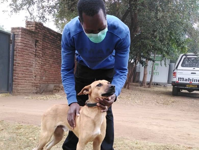 Malawi: Dog owner seeks veterinary help for its injured pet in a wheelbarrow