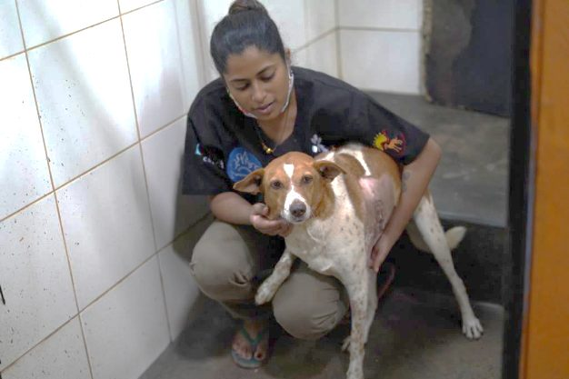 India: Chunky Chica, a street dog in need