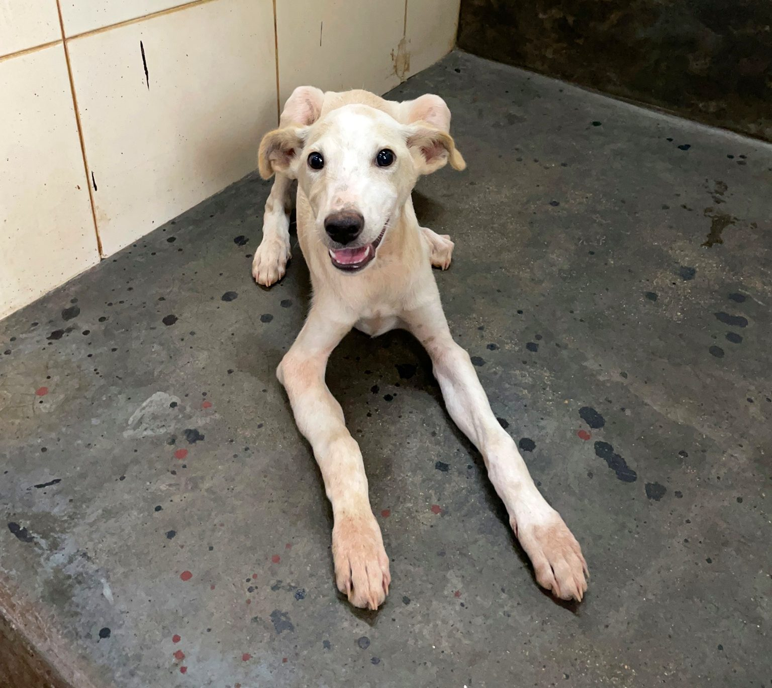 India: Puppy attacked with metal rod