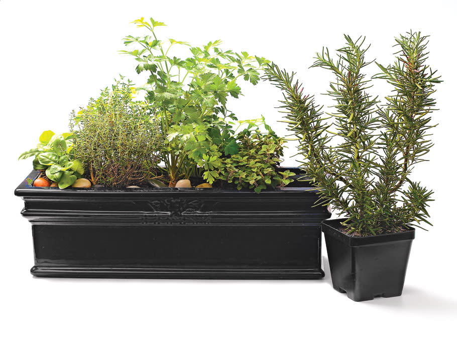 Article-How-to-Grow-a-Container-Herb-Garden-Lead
