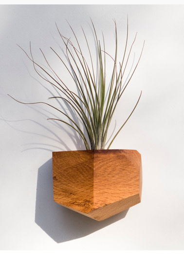 Wall Mounted Geometric Air Plant Holder Made from Reclaimed Red Oak