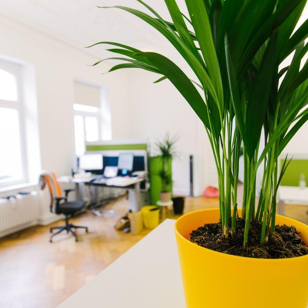 plantes bureaux