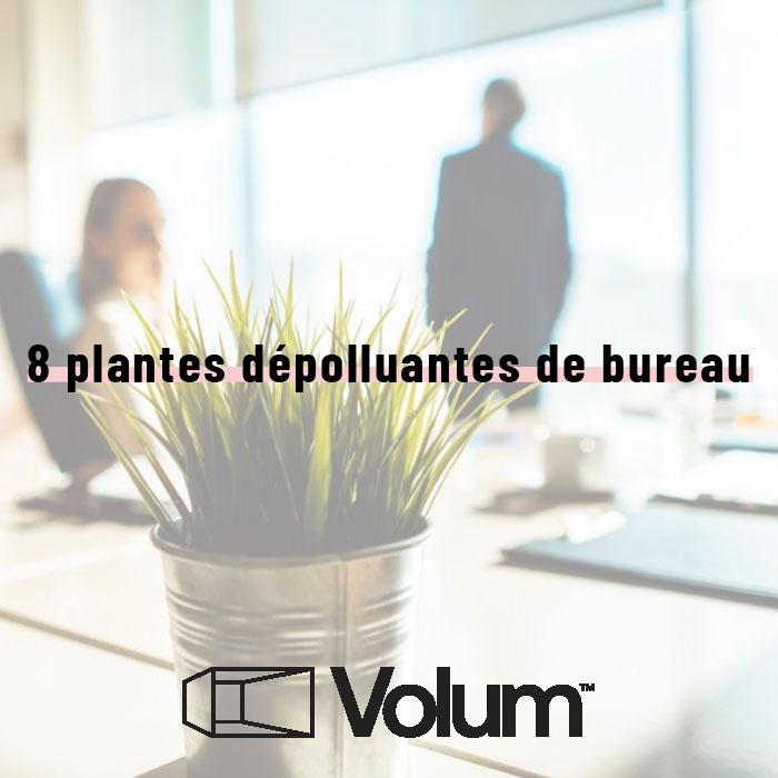 Sélection de 8 plantes dépolluantes pour le bureau