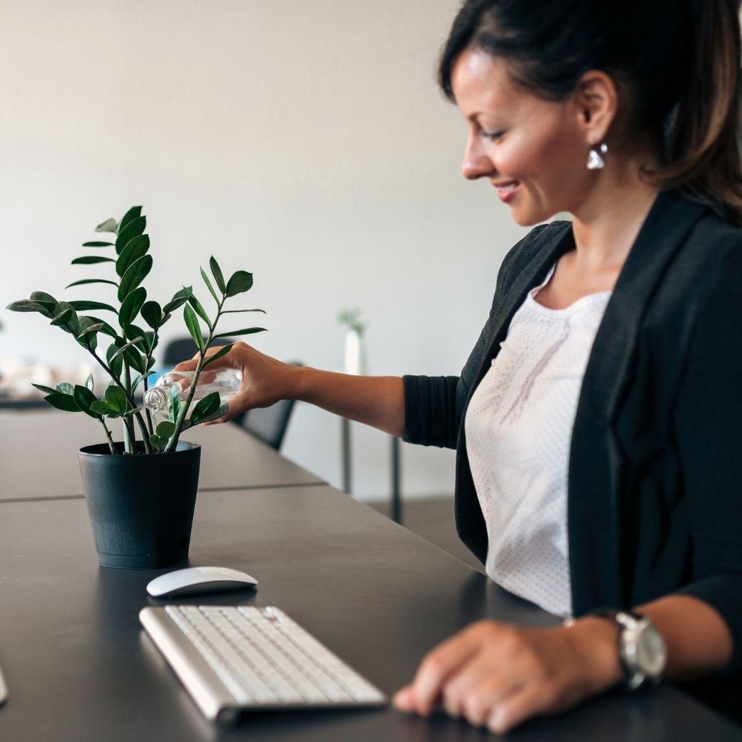 bienfait plante salarie