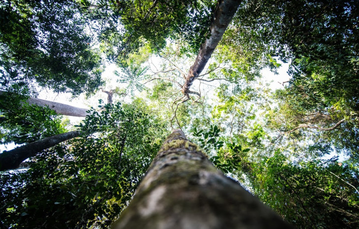 A picture of trees in the Gola Rainforest.