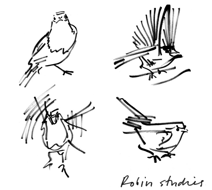 Drawings of a robin in different positions