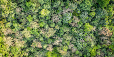 A view of the Gola rainforest from the air