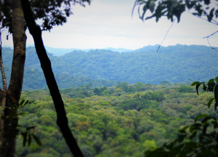 A picture of the Gola Rainforest in Sierra Leone