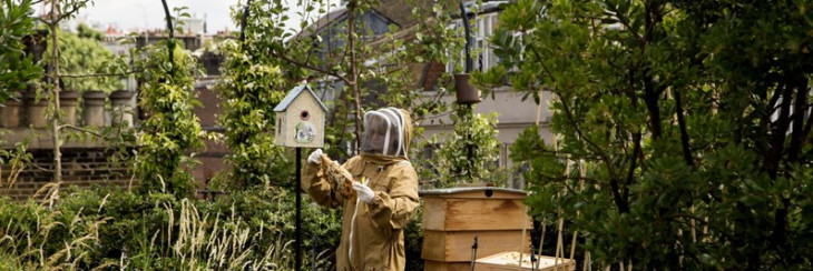 Lady in beekeeper suit looking at honeycomb