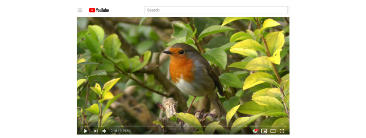 A screenshot of a video on Youtube about robins