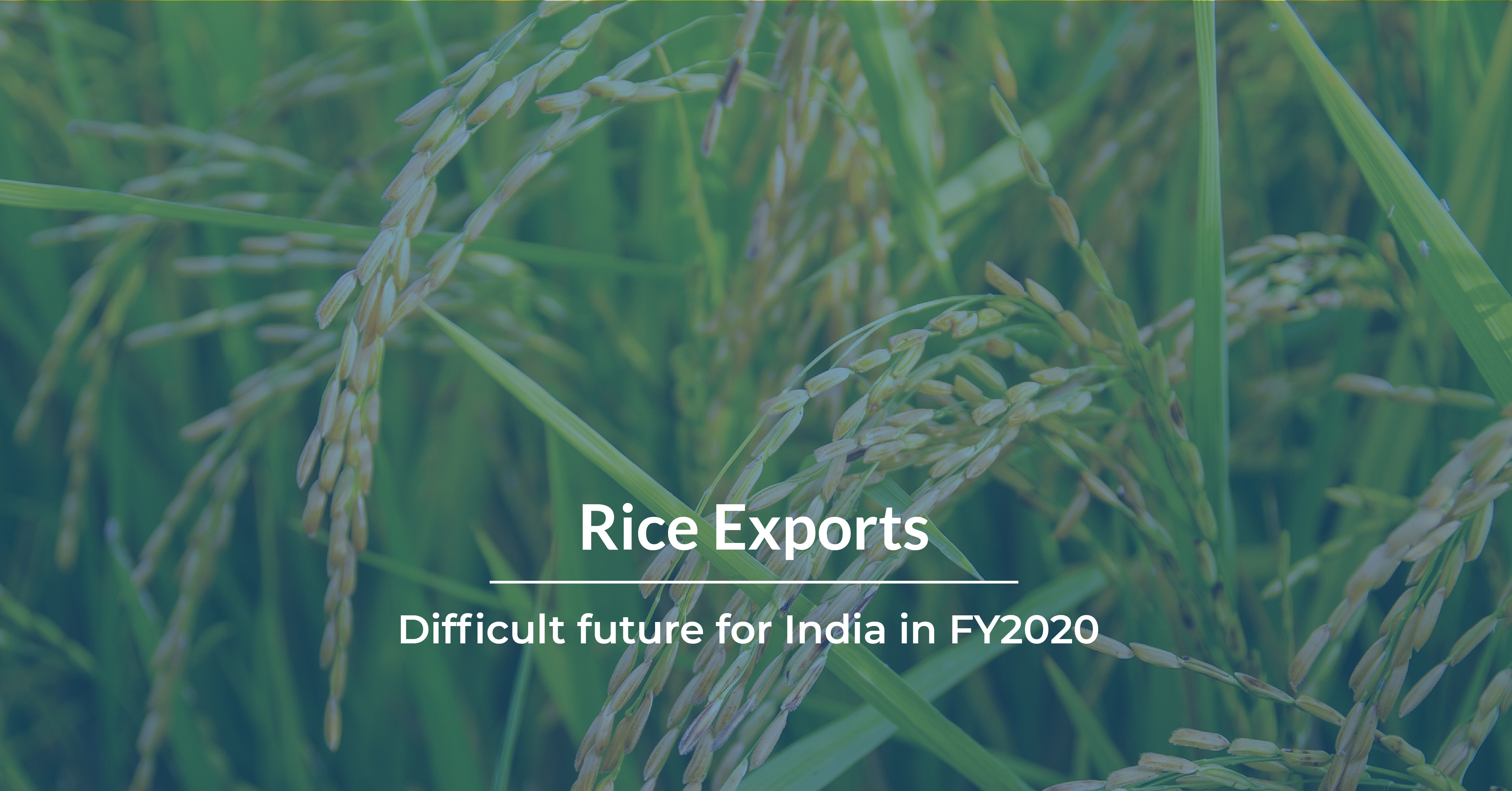 Rice Exports_Hero Image