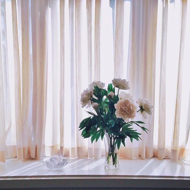 shadow-indoors-glass-curtain-arrangement-bouquet-leaves-vase-flowers-flowers-windows-floral-peony